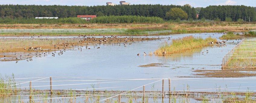 Lingezegen Waterrijk: nieuwe natuur bij de stad