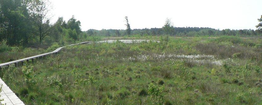 Panorama van veen en plankenpad, aug 2013