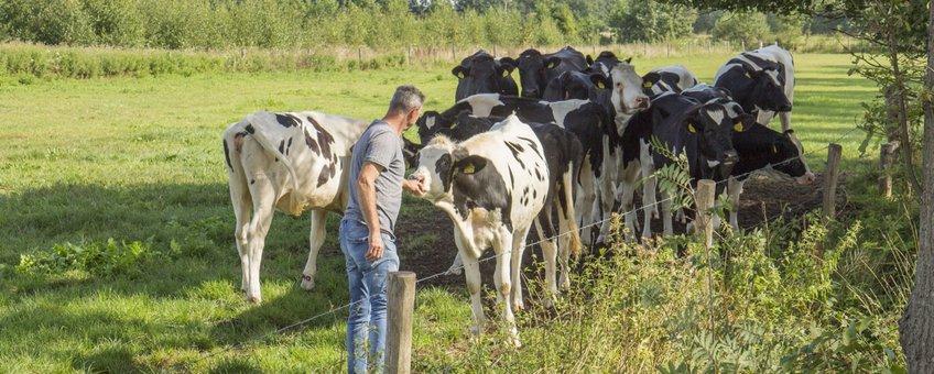 Melkveehouder Kees Fonken - eenmalig gebruik