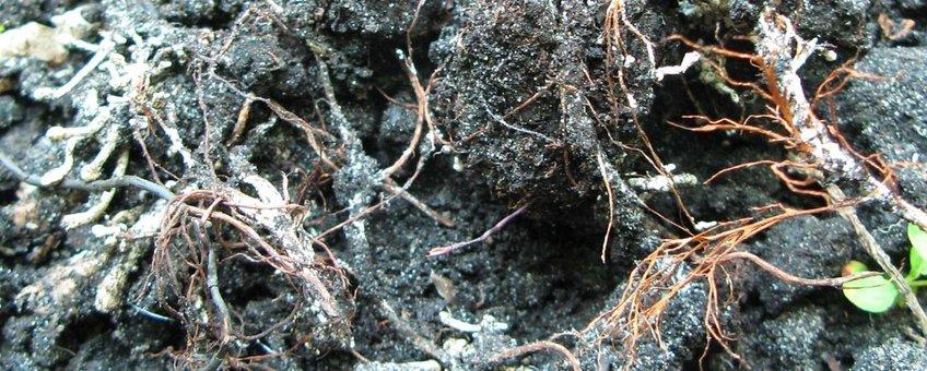 Schimmels hebben organisch materiaal nodig om te leven