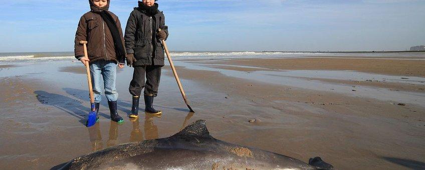 aangespoelde bruinvis