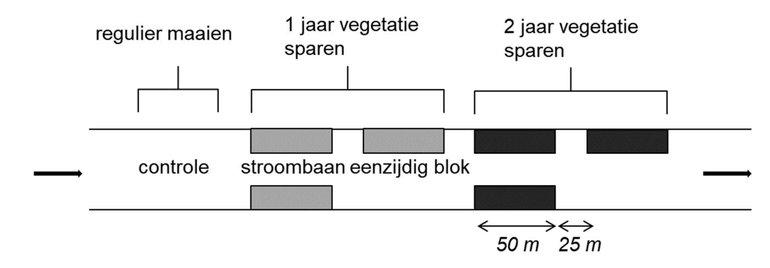 Opzet van het veldexperiment om de kortetermijneffecten van maaibeheer met 5 deeltrajecten van 50 m lengte te onderzoeken. Regulier maaibeheer (controle), 1 jaar eenzijdig en tweezijdig (stroombaan) niet-maaien, 2 jaar eenzijdig en tweezijdig niet-maaien. De afstand tussen de verschillende vegetatieblokken bedraagt 25 meter, waartussen regulier gemaaid is