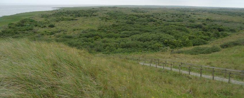 uitzicht op de duinen van 't Oerd vanaf een uitkijkpunt aan de westkant van het duingebied