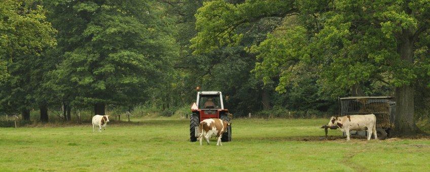 Twickel heeft een prachtig kleinschalig landschap. Voor de landbouw levert dit uitdagingen op, maar een Boeren voor Natuur boer kan er goed mee werken
