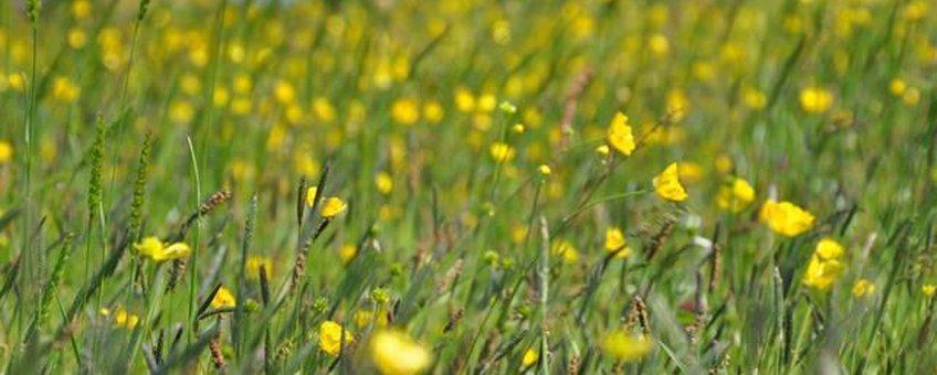 Kruidenrijk grasland foto René Faber