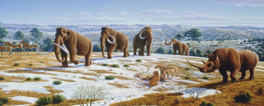 De afbeelding toont een laat-Pleistoceen landschap met wolharige mammoeten, paardachtigen, een wolharige neushoorn en Europese holenleeuwen met een rendierkarkas.