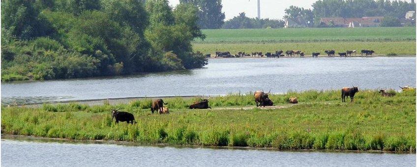 De Hellegatsplaten in het Zuid-Hollandse deel van het Volkerakmeer