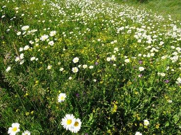 Dit prachtige bloemengordijn moet zeker niet helemaal worden afgeknipt, maar de verfraaide stukken moeten blijven