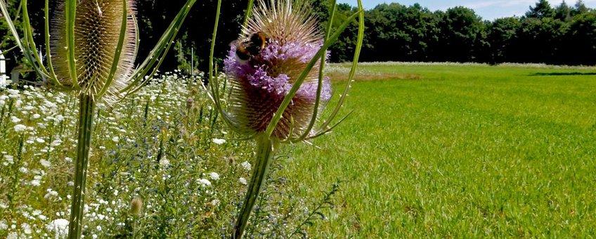 Bloemenstrook langs grasland 2