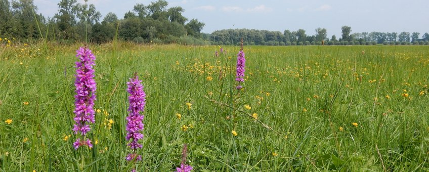 bloemrijk grasland - primair