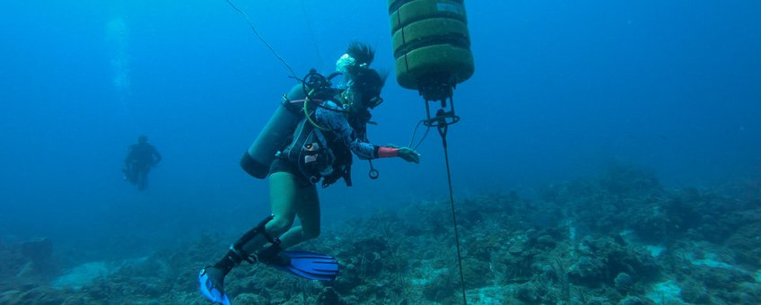 Hydrophones (underwater microphones) on the Saba Bank record sounds of a variety of marine species, from whales and dolphins to schools of fish