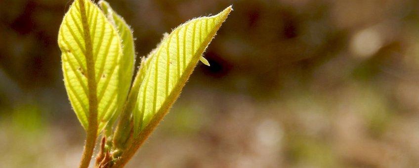 citroenvlinder ei primair