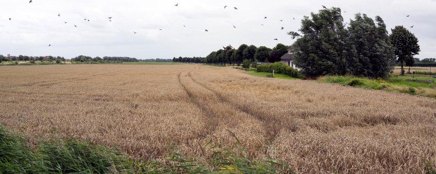 Buijtenland van Rhoon, rondweg Rhoon, wind, vogels, akker, akkernatuur, natuurinclusieve landbouw