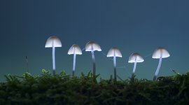 Gelderse natuurfotowedstrijd macro paddenstoelen