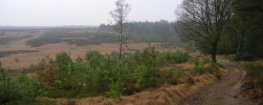 Veluwe-Imbosch