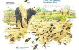 De stierenkuil en zijn sleutelrol in de natuur EENMALIG GEBRUIK