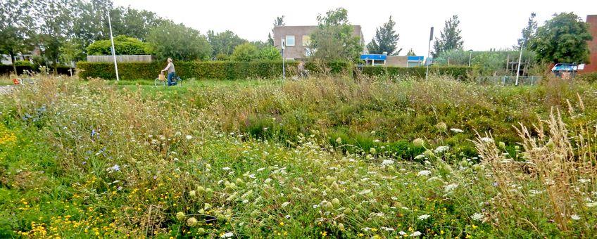 natuur in de stad Culemborg