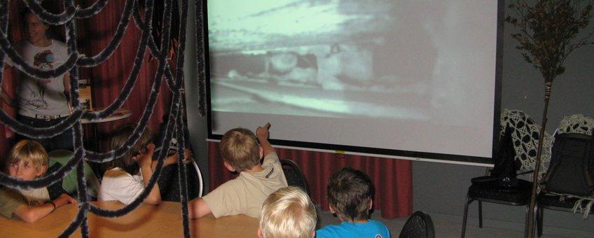 eerste beelden van vleermuizen webcam waddinxveen