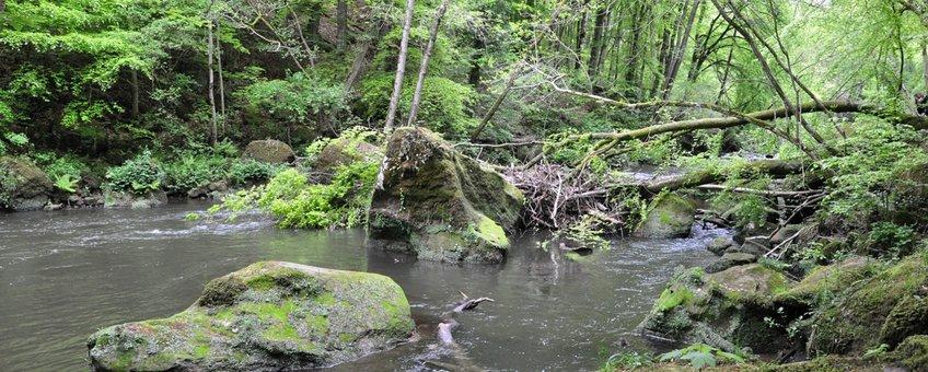 Bos in de Eifel, Duitsland