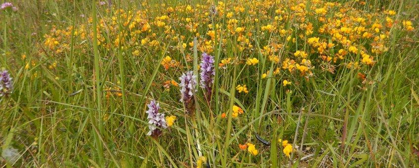 rolklaver en orchidee