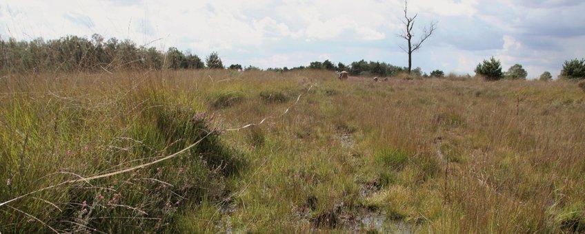 heide in Noord-Brabant