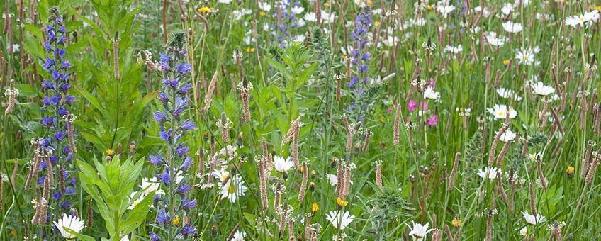 Bloemenmengsel met inheemse soorten