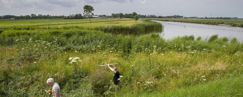 Natuurvriendelijke oever langs Omval-Kolhorn kanaal