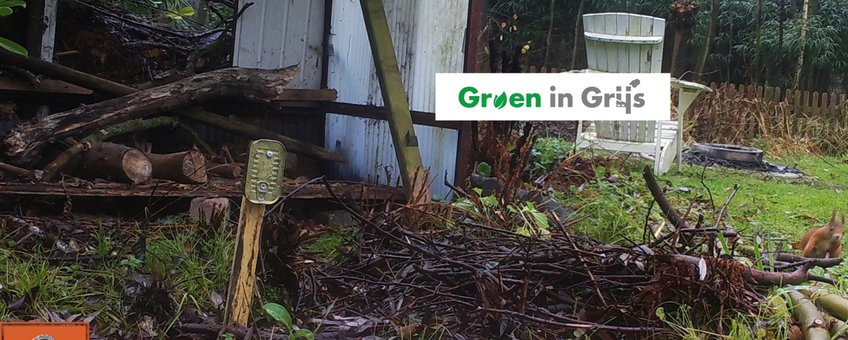 eekhoorn in tuin, wildcamera Groen in Grijs logo