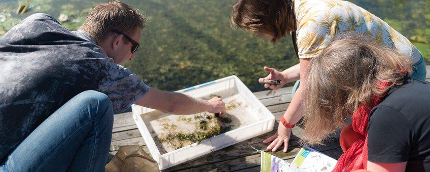 Waterdiertjes zoeken tijdens slootjesdagen