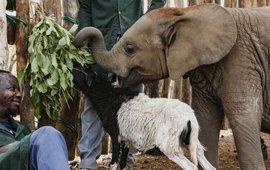 Nania met haar verzorger en haar schapenmaatje Whisty.