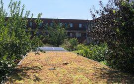 Groen dak in hofje lead