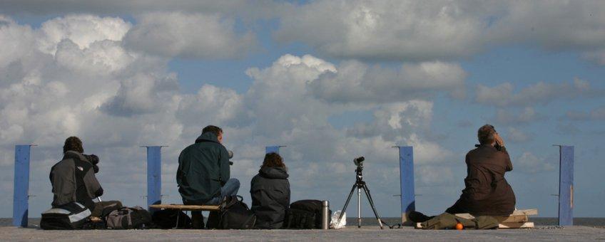 Zeetrektellers kijken over zee op Schiermonnikoog