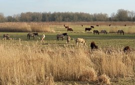 Rode geuzen en konikpaarden in het Munnikenland