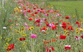 Bloemenmengsel in akkerrand