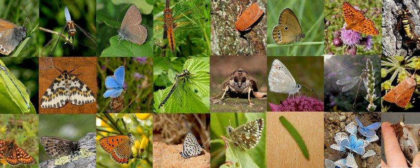 vlinders en libellen puzzelen - primair