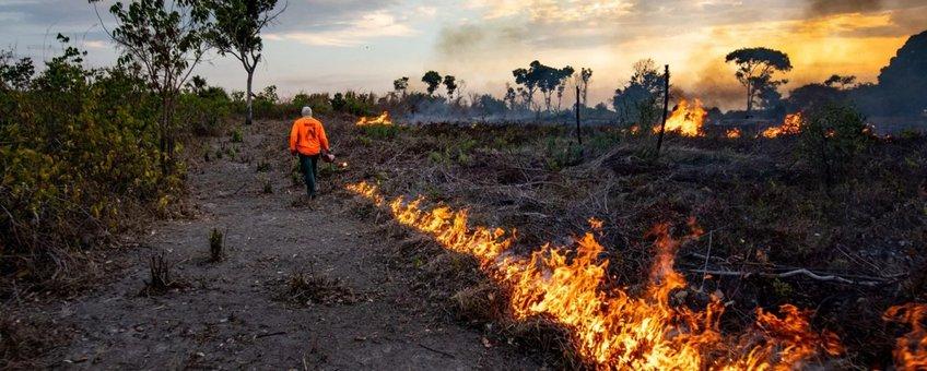 Bosbranden Cantão State Park, Brazilië