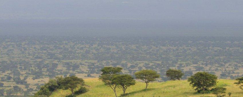 Overwinteringsgebied van Grauwe klauwieren in Afrika