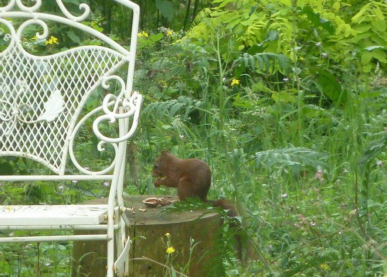 Eekhoorn eet netjes 'aan tafel'