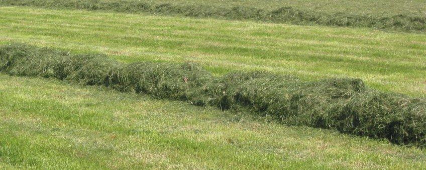 Weiland, kuilvoerwinning. grass_silage.