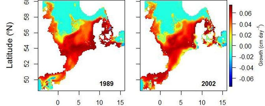 Deze habitatkaart van de Noordzee voor jonge schol (zo'n 25 cm groot) laat zien dat sinds 1989 de kustzones van rood (= hoge potentiële groeisnelheid jonge schol) naar geel (= lage groeisnelheid) en lokaal naar groenblauw (= negatieve groeisnelheid) zijn verkleurd. Het recent ontwikkelde model toont aan dat de kustzones vanaf 2002 een ongeschikte habitat is voor jonge schol van deze grootte.