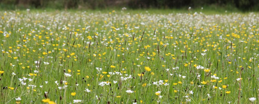 Bloemrijk grasland in wijstgebied