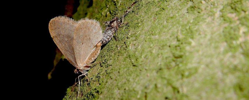 kleine wintervlinder paring primair