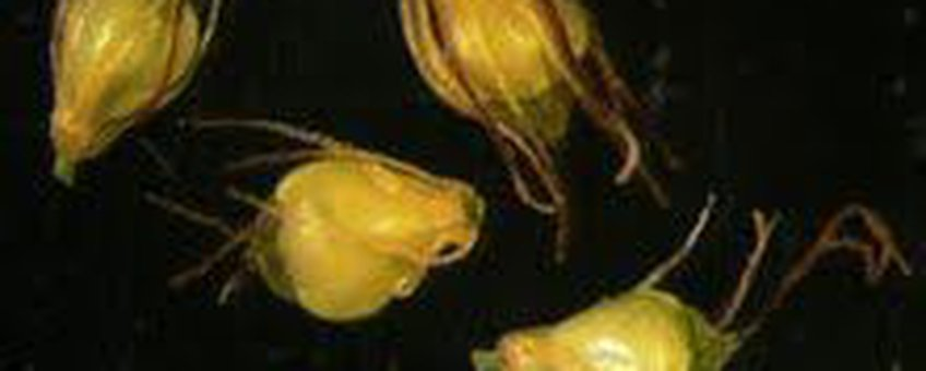 Eivormige waterbies foto's voor eenmalig gebruik