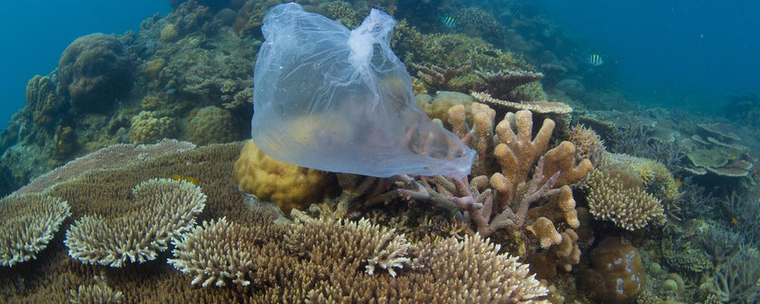 Plastic in zee