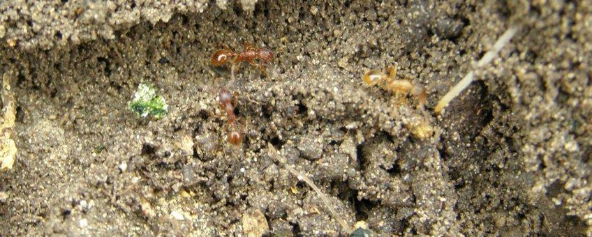Mieren wijzen ons de juiste weg