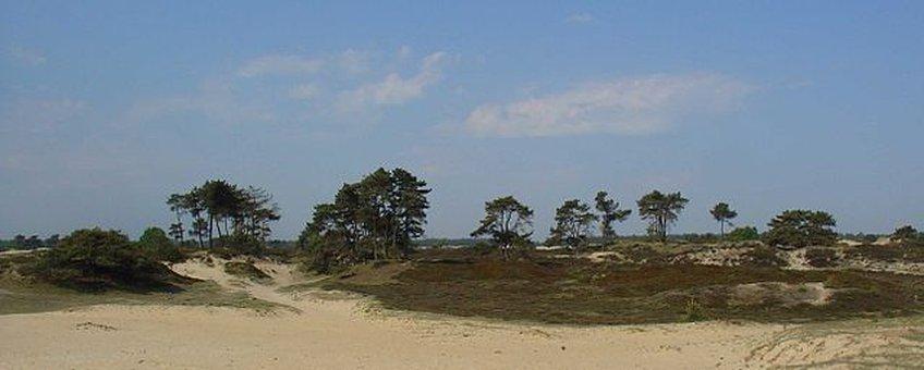 Aekingerzand, Nationaal Park Drents-Friese Wold