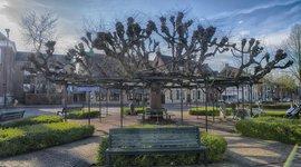Moeierboom