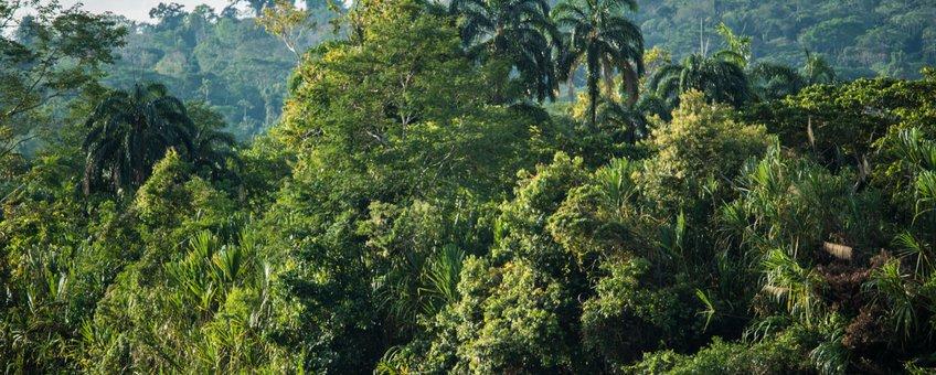 De tropische Amazone