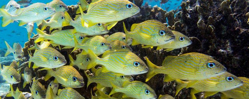 School rifvissen