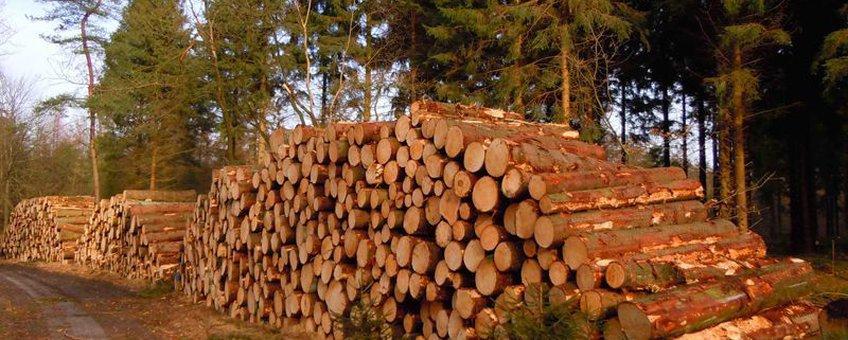 Kaalkap fijnsparren bos